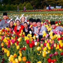 Photos – Tesselaar Tulip Festival