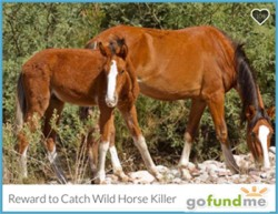 Updates – Salt River Wild Horse Management Group