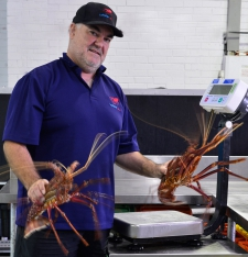 Lobster Alive Gallery